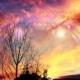 arbre ciel cosmos